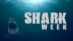 Hungry Sharke Discovery Channel per la Shark Week