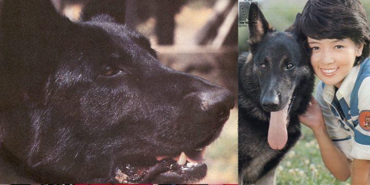 Superdog Black (Keijiken Karl)
